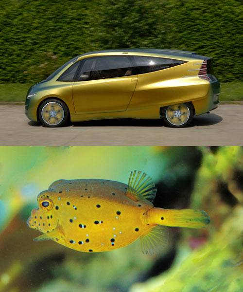 BOXFISH-bimomicry-car.jpg.644x0_q70_crop-smart.jpg