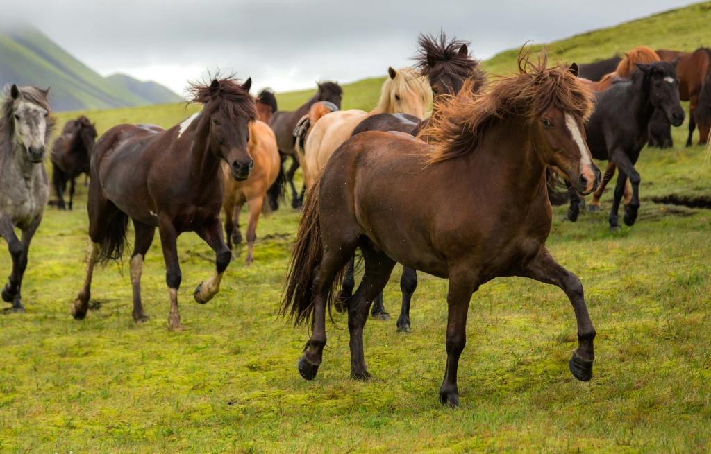 Landmannalaugar-hiking-day-tour-Iceland