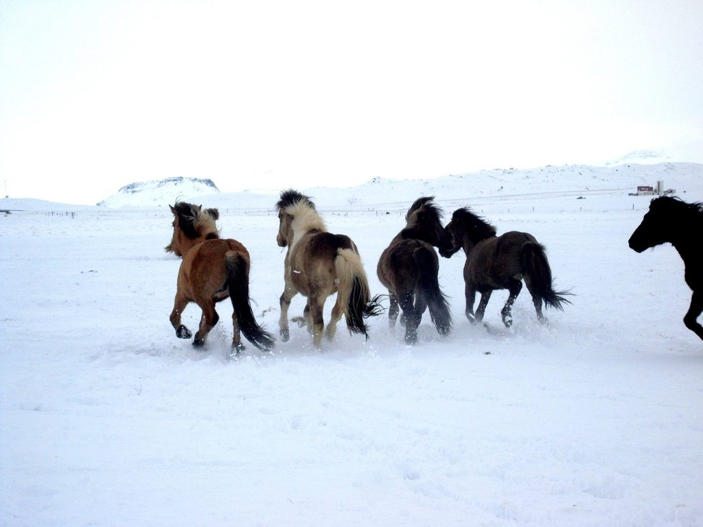 paskahret-icelandic-word