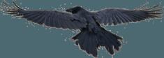 ravens-of-iceland