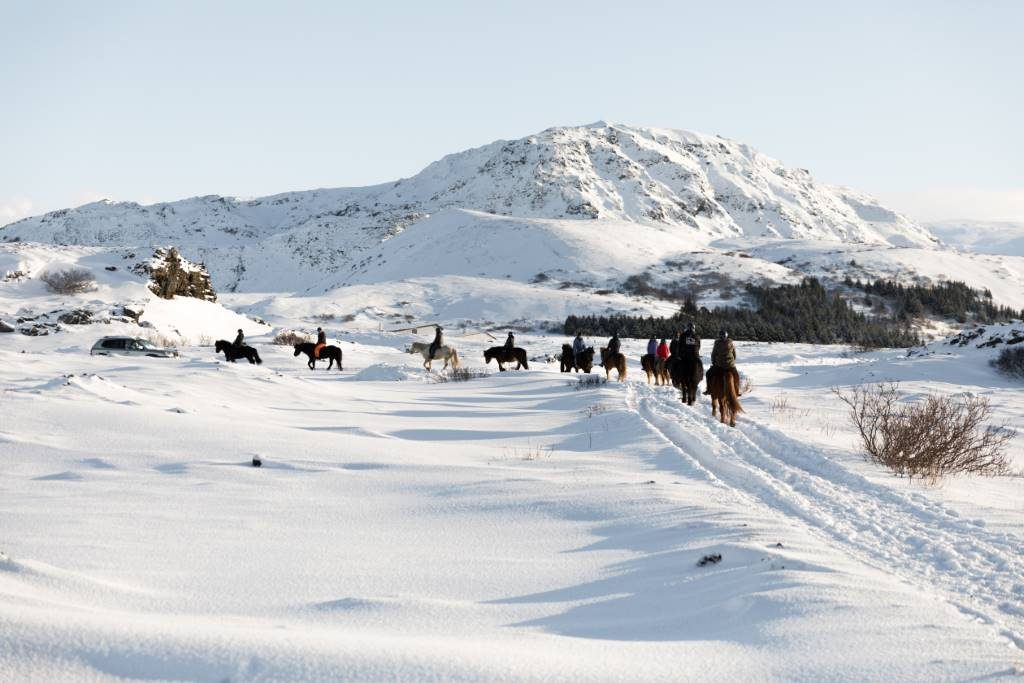 Horse riding in winter in Iceland