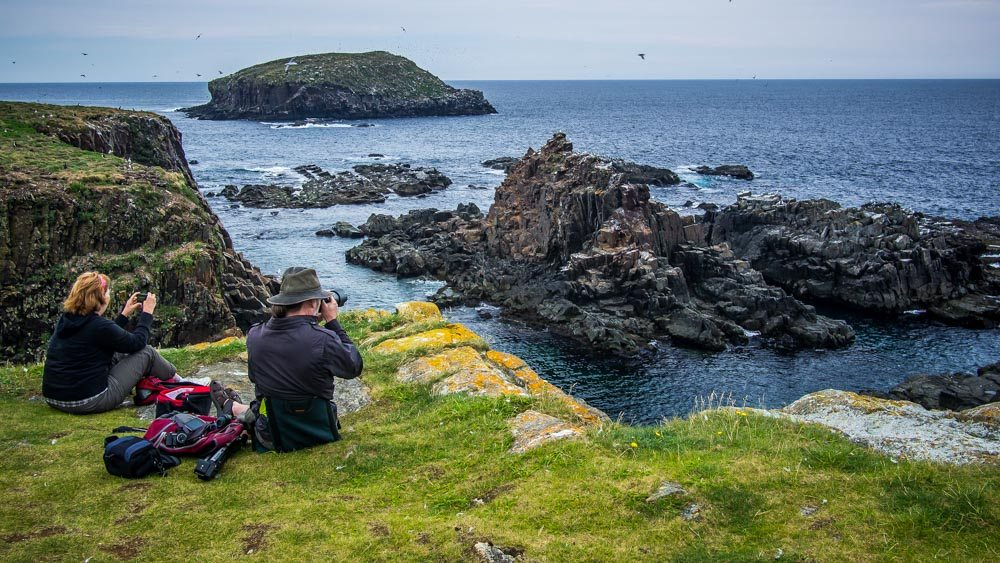 Watching for puffins
