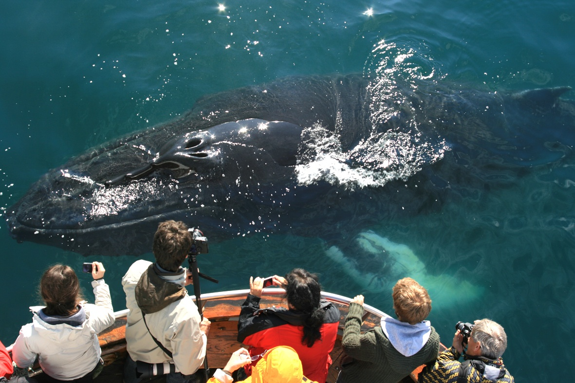 Whales & Puffin Tour