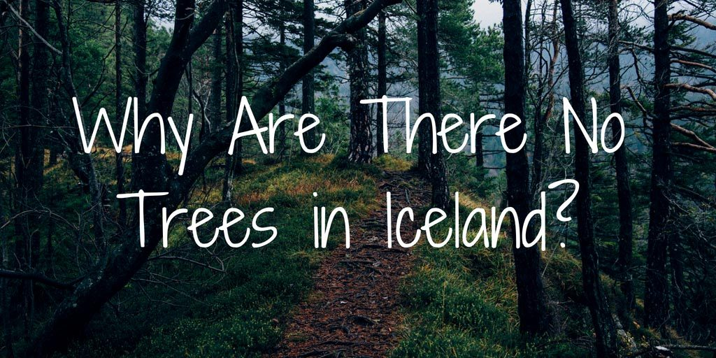 Why are there no trees in Iceland