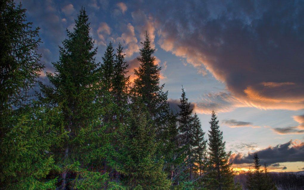 Vaglaskogur Forest