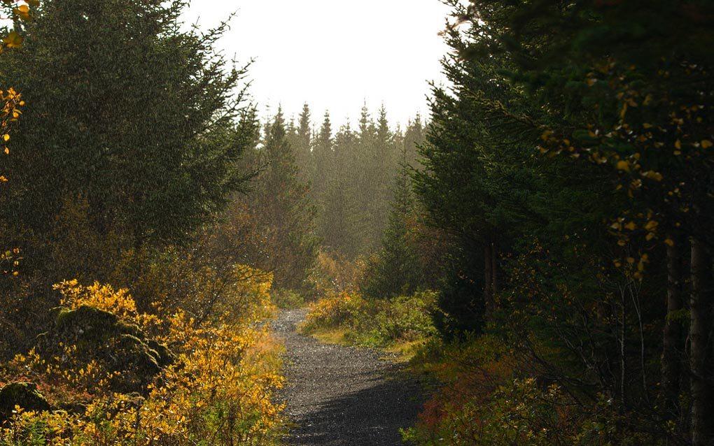 Heidmork Forest Iceland