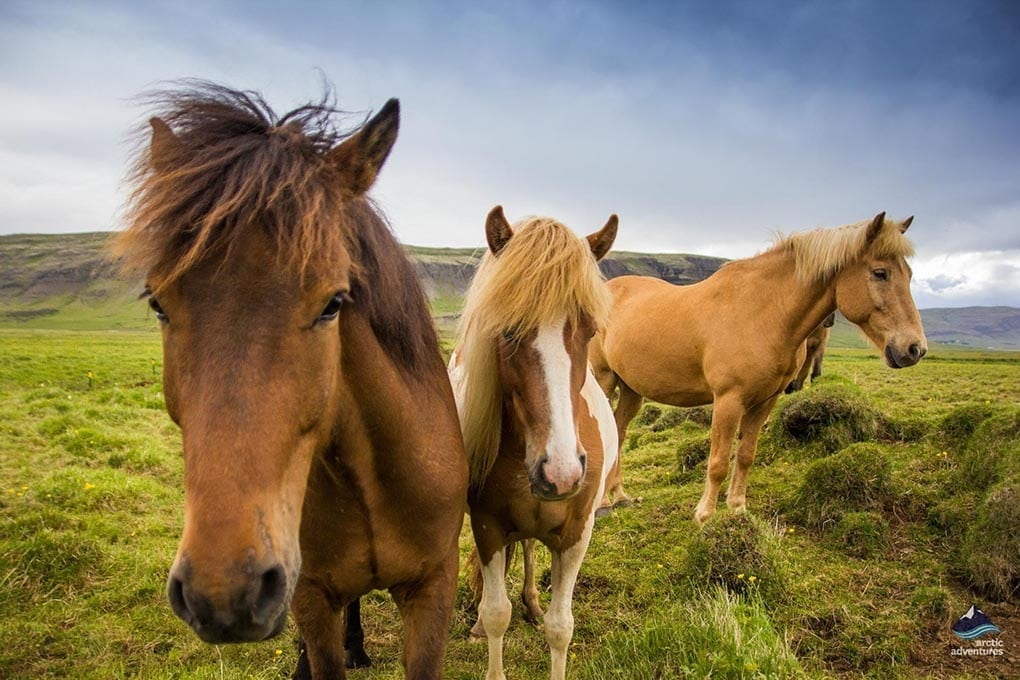 Horse Riding Tours in Iceland