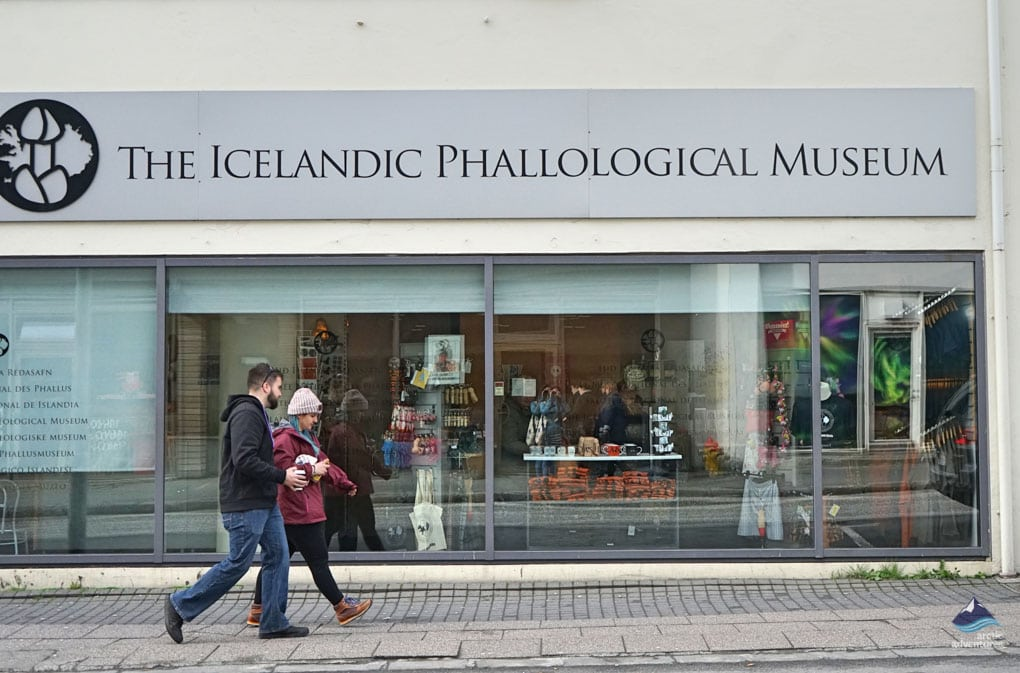 Penis-museum-reykjavik-Iceland