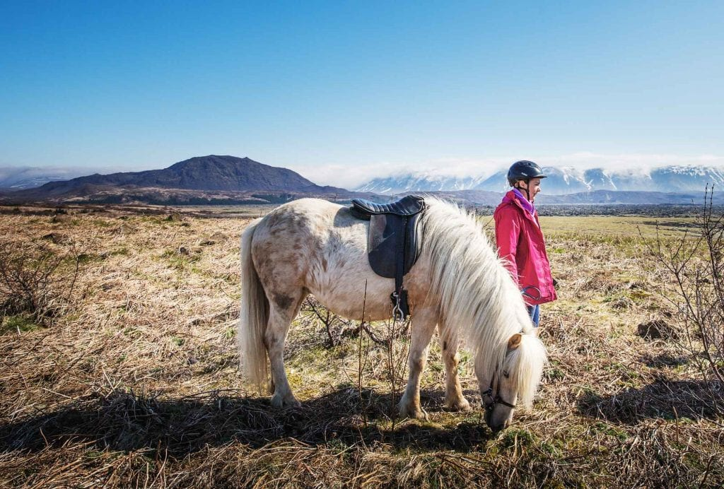 Horse Tour in Iceland