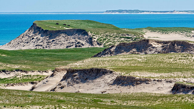Landscape of Sable Island with horses in the distance