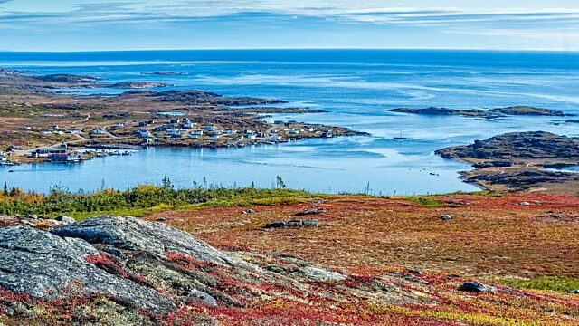 Red bay labrador 2