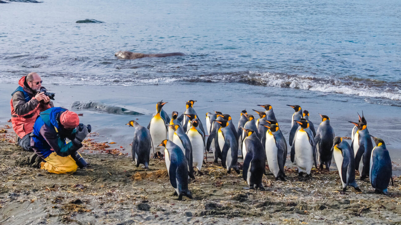 Photographers and king penguins