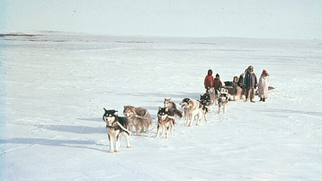 1962 dog sled team victoria island