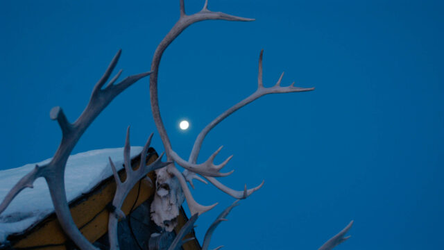 Caribou antlers and full moon