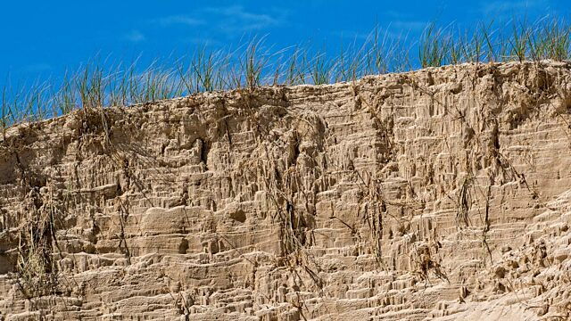 Creeping roots of dune grass