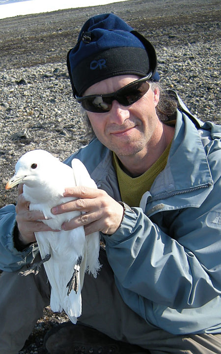 Mark With Ivory Gull