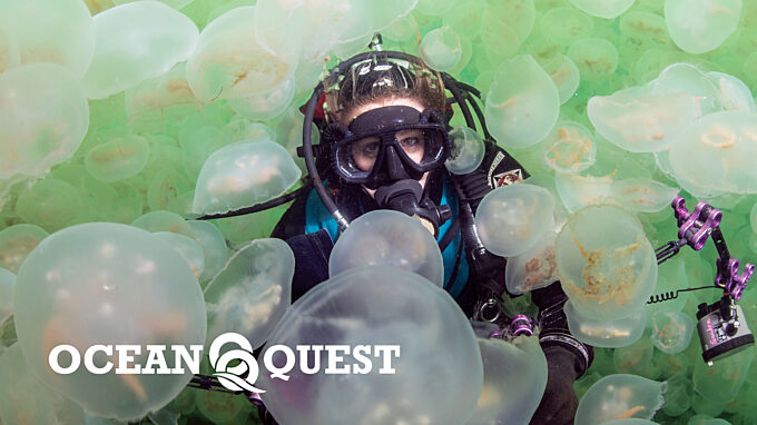 Diving among jellyfish with ocean quest