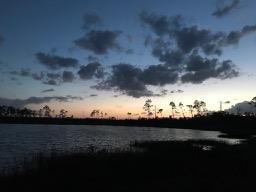 Ocala National Forest 13