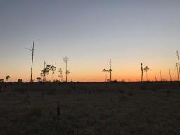 Ocala National Forest 02