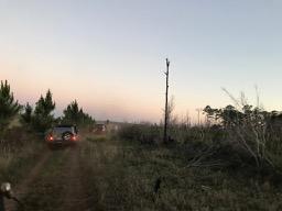 Ocala National Forest 01