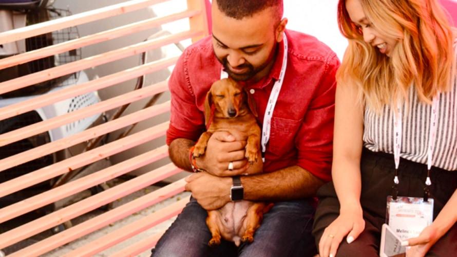 puppy workplace jukin media