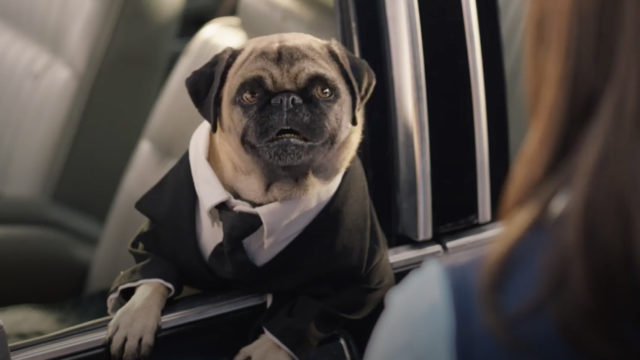 the pug from Men in Black