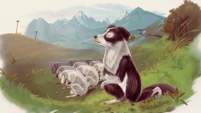 a black and white dog kneeling outside a group of all white dogs in a meadow