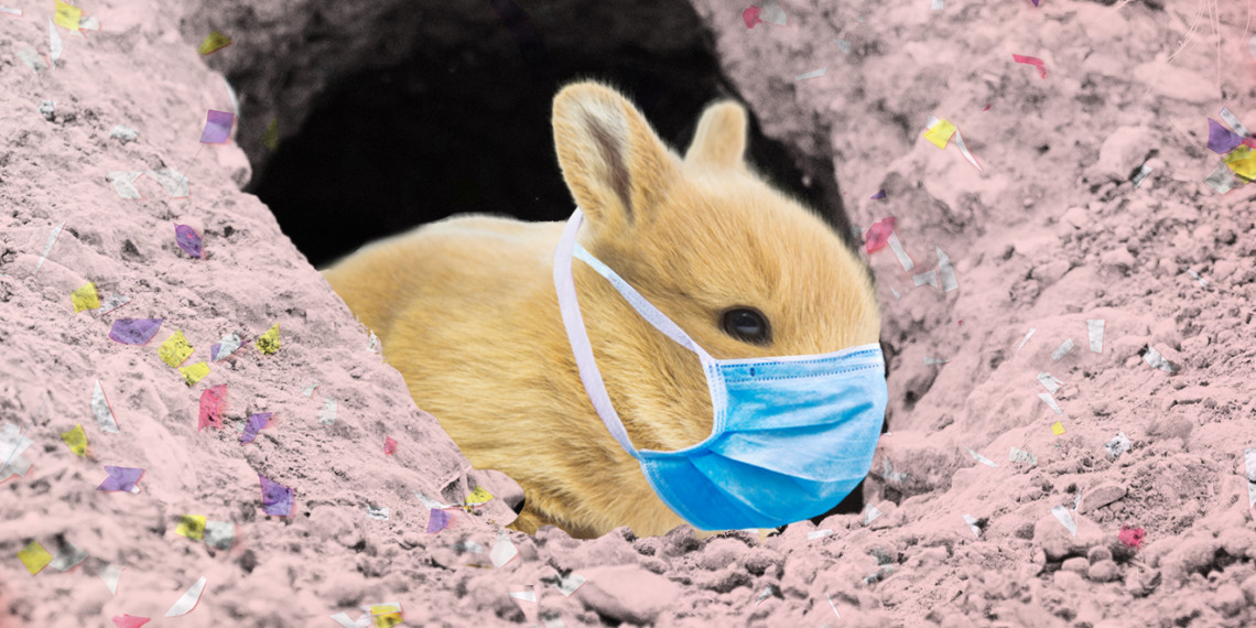 bunny with a protective face mask