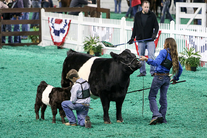 Largest Livestock Exposition In The World Arrives In