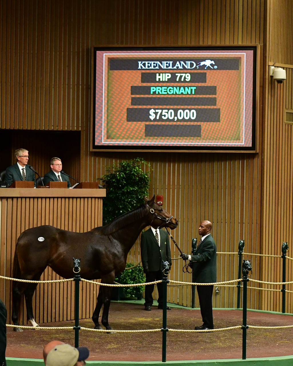 750k Distorted Humor Mare Leads Day Two At Keeneland January Horses Of All Ages Sale Lane Report Kentucky Business Economic News