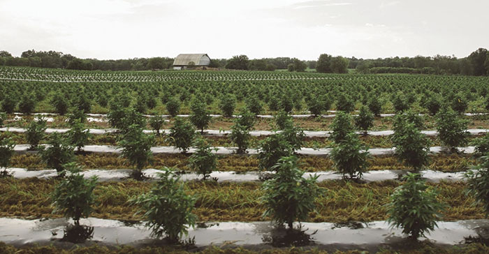 Hemp Moves into Growth Mode – Lane Report | Kentucky Business