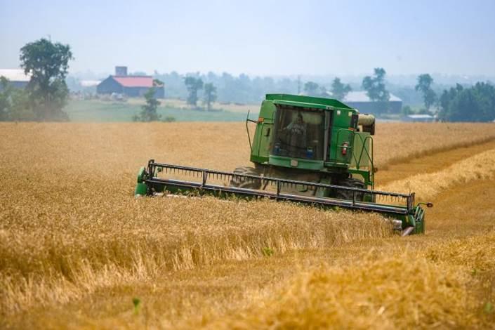 wheat yields