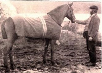 Thos. Connolly with Horse