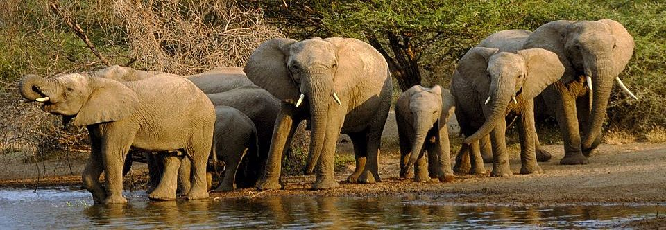 Take a Walk on the Wild Side & Explore Africa with Earthbound Expeditions