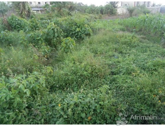 Terrain de 1000m2 a vendre a Molyko, Buea.
