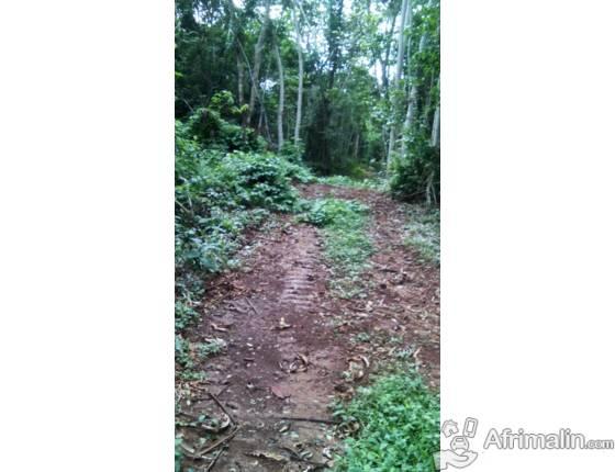 500 ha pour exploitations agricoles en vente njombe penja