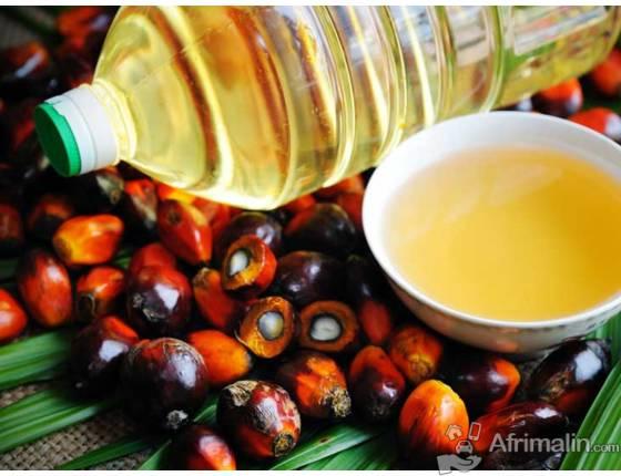 huile de palme en stock