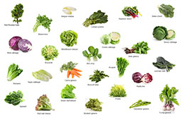 27 Types of Greens