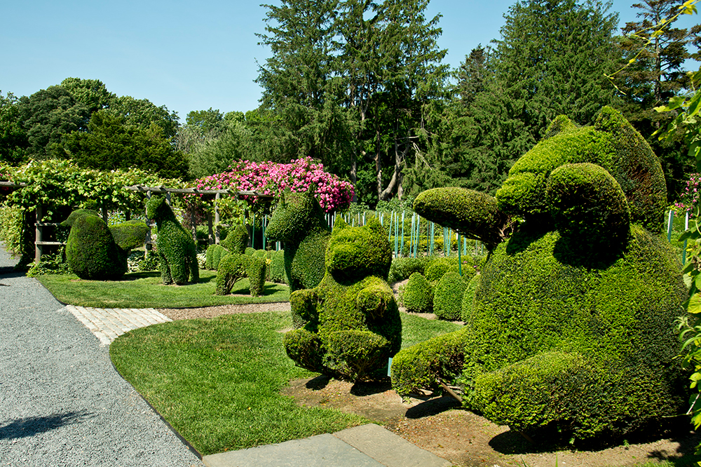 Animal hedges at Green Animals Topiary Garden