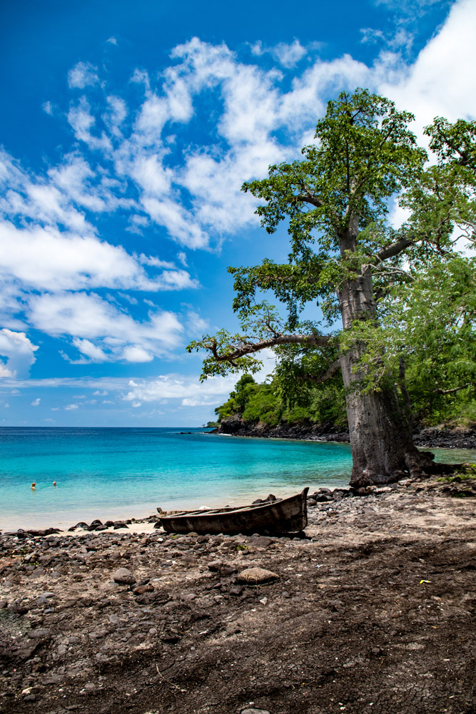 A baobab tree looms over a blue lagoon in São Tomé and Príncipe