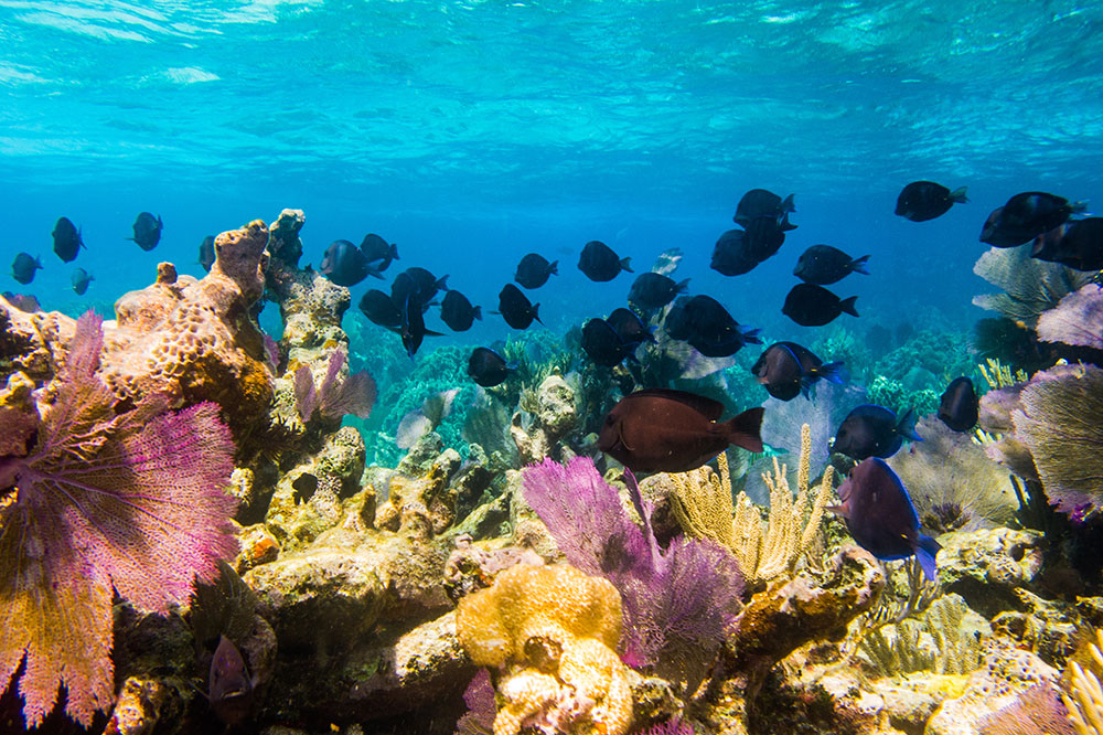 Coral and tropical fish off Turks and Caicos in the Caribbean Sea