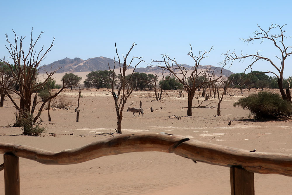 An oryx seen from the dining terrace at Little Kulala