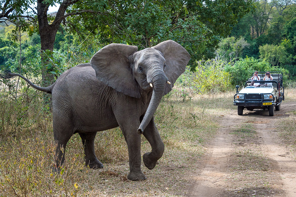 A game drive at Mkulumadzi lodge in Majete Wildlife Reserve
