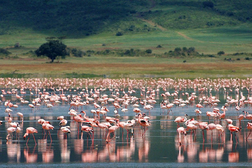 Flamingos at &Beyond Ngorongoro Crater Lodge in Ngorongoro Conservation Area, Tanzania