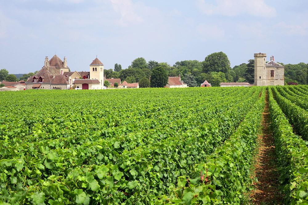Vineyards at Clos de Vougeot in Vougeot, France
