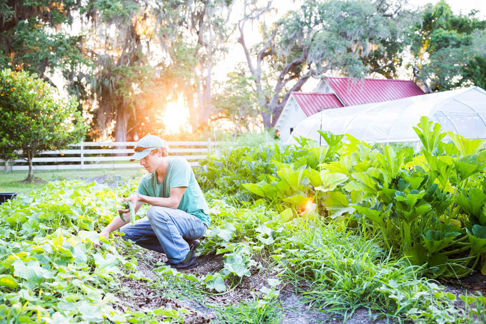 The full-time gardener harvests greens from the 1.5-acre garden at Greyfield Inn