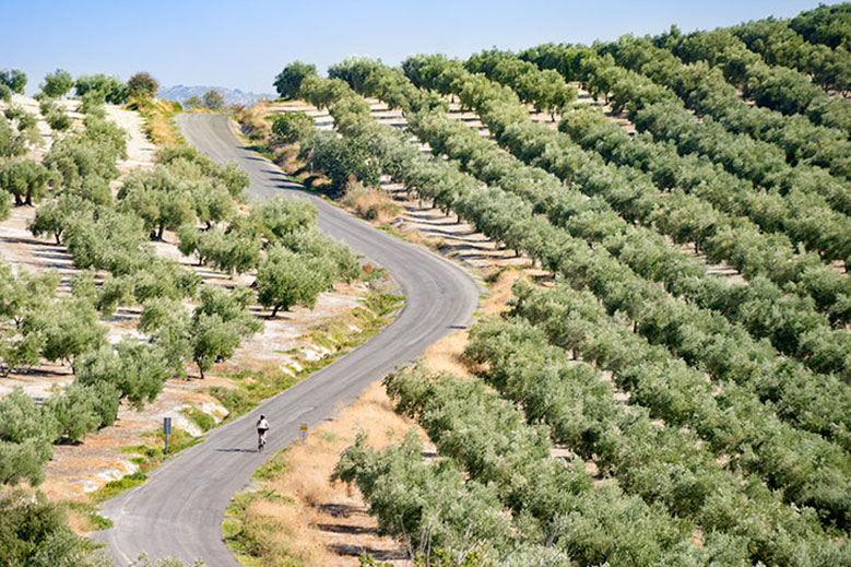 Pedaling Southern Spain