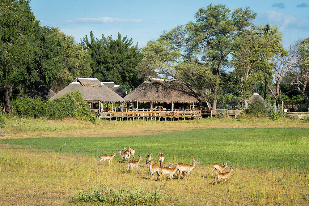 Mombo Camp & Little Mombo Camp in Okavango Delta, Botswana