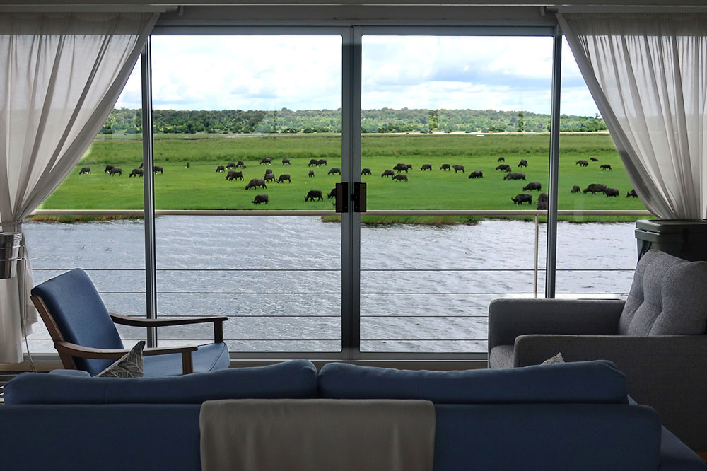 The view of Cape buffalo from the main lounge on the <em>Zambezi Queen</em>