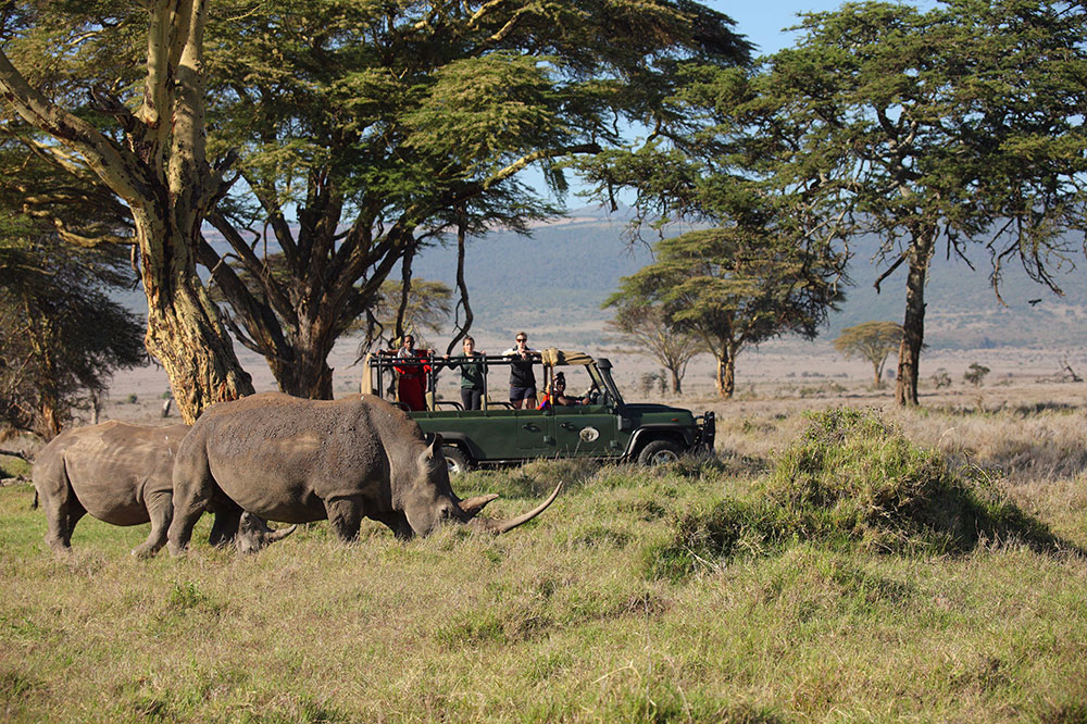Rhino safari near Sirikoi Lodge in Lewa Downs Conservancy in Kenya
